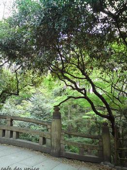 橋cafedesunico.jpg